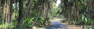 Mangalore to Kukke Subrahmaniya